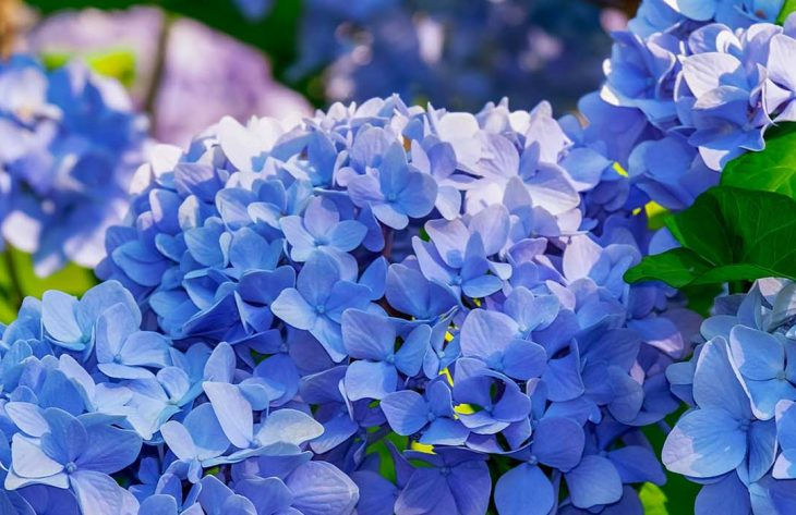 Blumensortiment in Wemding