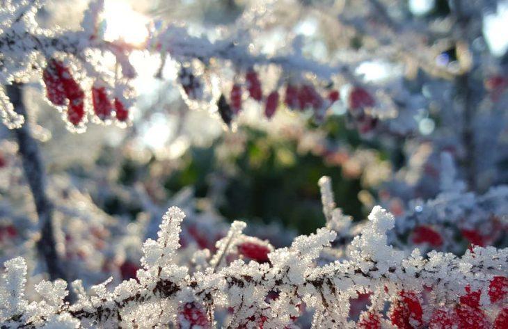 Gartenkalender Januar