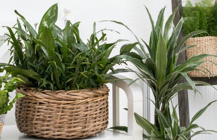 Grünpflanzen für ein schönes Zuhause Ratgeber