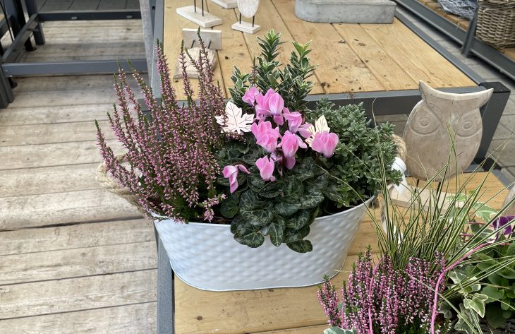 Bepflanzte Schalen Outdoor